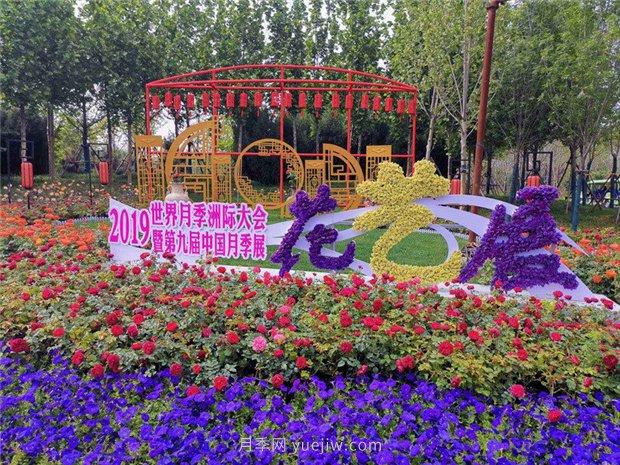 月季网数据:中国73个月季(玫瑰)市花城市名单大全(图3)